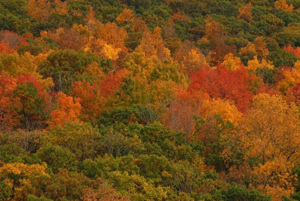 autumninthefingerlakes