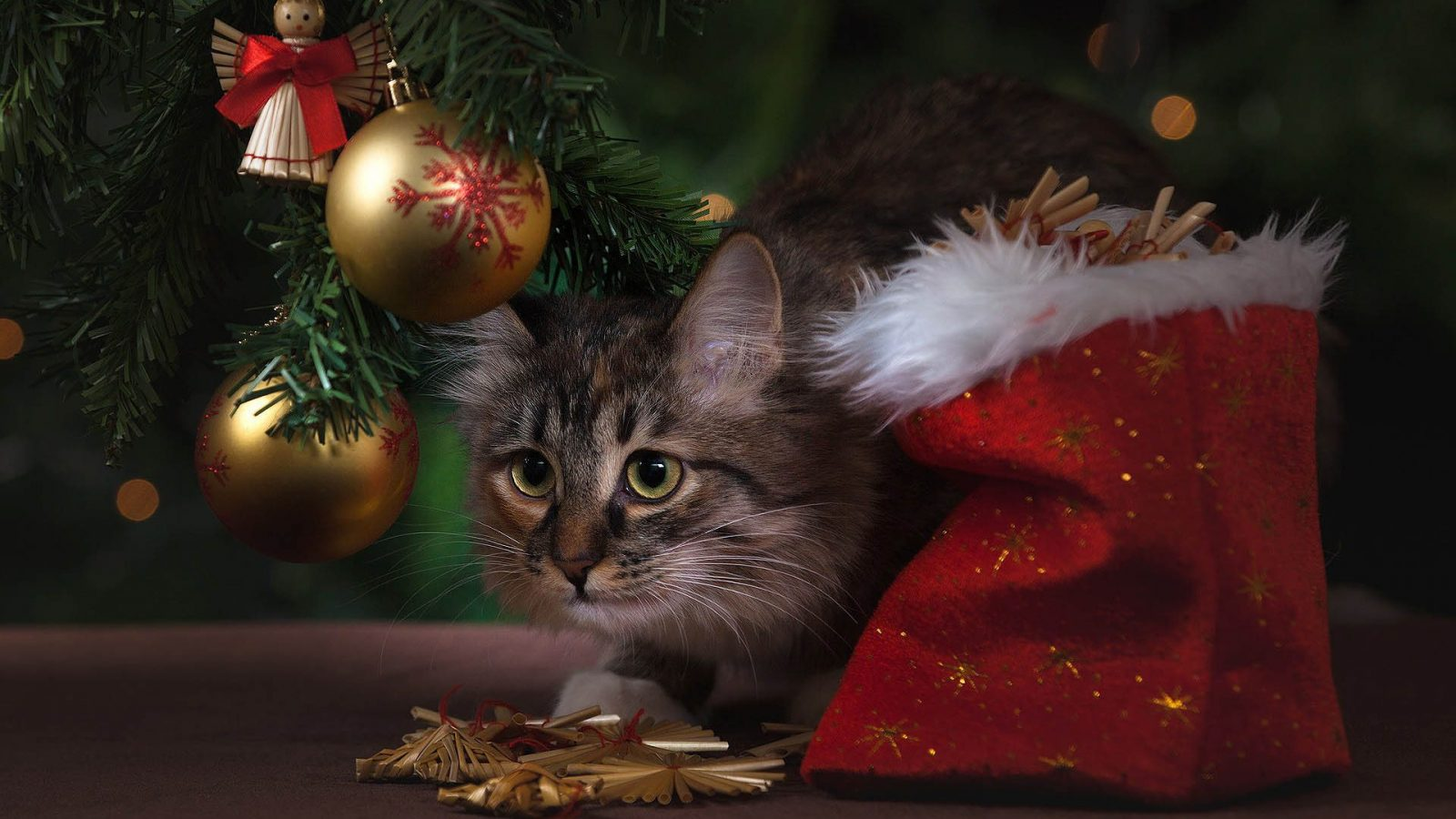 Christmas tree with cat